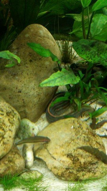 Eel Pic 3.jpg