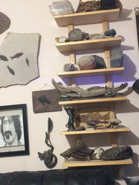 IMG_1139.JPG fossil shelf.jpg