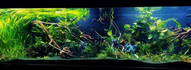 300 gallon poly paradise.jpg