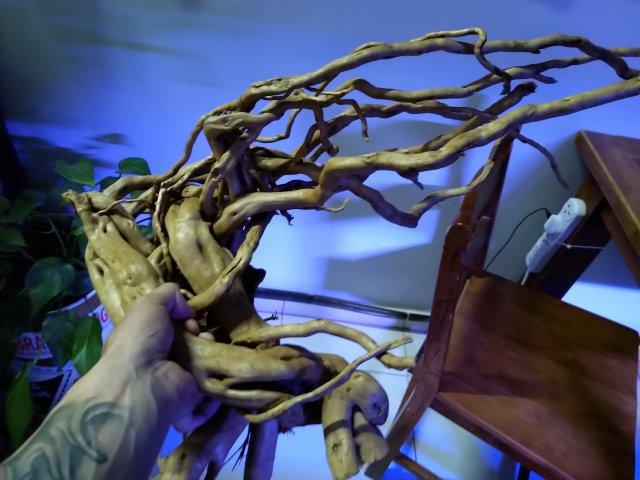 new drift wood2.jpg