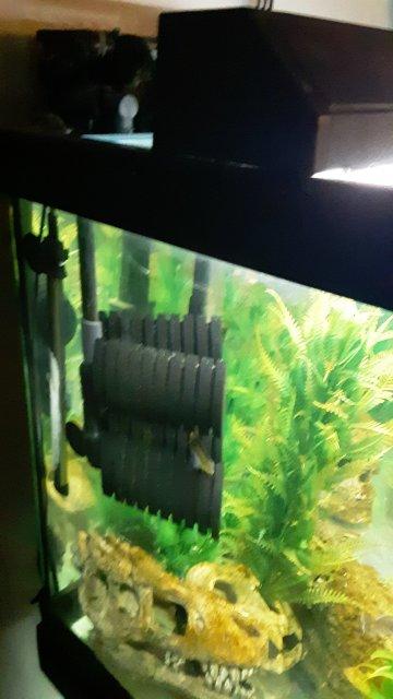 aquarium sponges.jpg