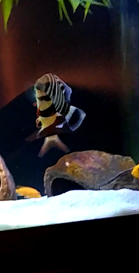 Loach 1.png