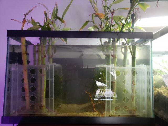 10 Gal Shrimp Tank.jpg