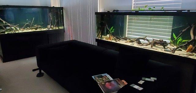 20210802_KY Fish Room 1.jpg