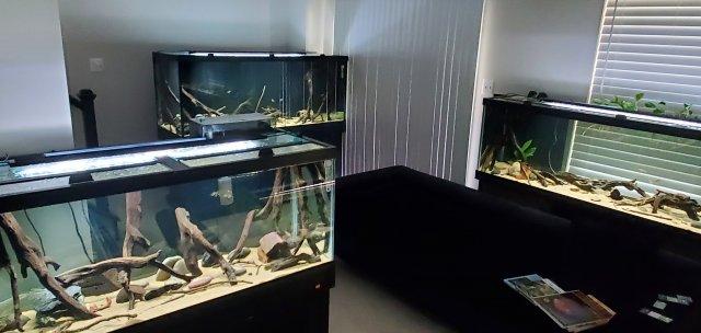 20210802_KY Fish Room 2.jpg