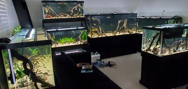 20210802_KY Fish Room 4.jpg