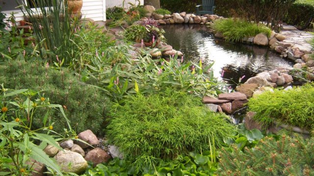 Pond 10.JPG