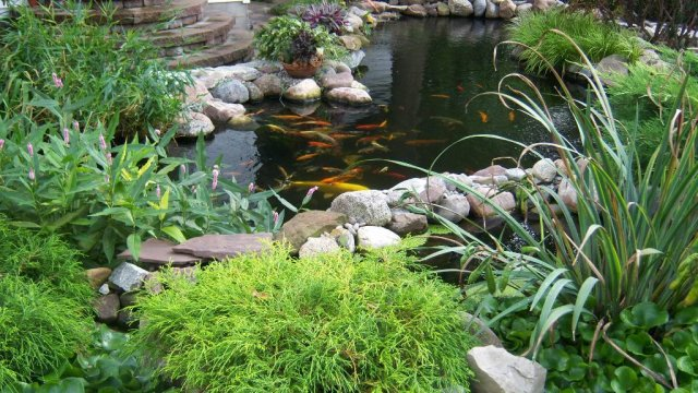 Pond 11.JPG