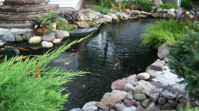 Pond 17.JPG