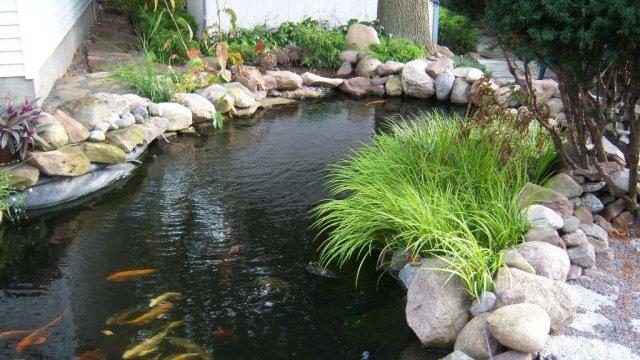Pond 21.JPG