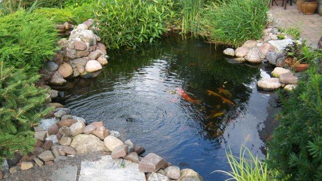 Pond 22.JPG