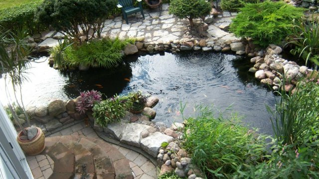 Pond from above 1.JPG