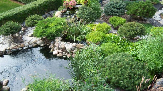 Pond from above 2.JPG