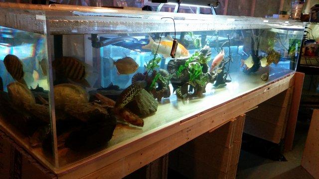 Diy Monster Acrylic Tank Monsterfishkeepers Com