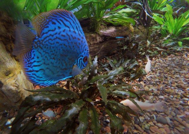 GoPro fish 1.jpg
