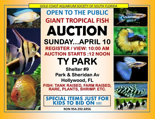 S florida tropical fish auction 4 10 16 sunday for Jan s tropical fish
