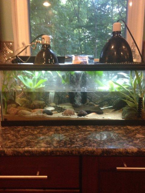 Alligator Snapping Turtle Tank Setup Monsterfishkeepers Com