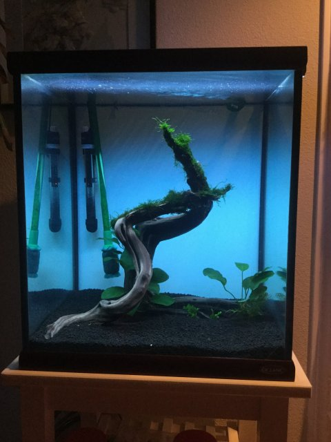Ideas For Aquascape 60gal Cube Tank Monsterfishkeepers Com